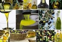 L'olivicoltura lombarda verso Expo 2015