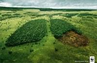 Bilancio 2011 del WWF