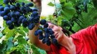 Giovani e agricoltura Como prima in classifica