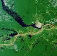 Allarme Amazzonia – cifre della tragedia e dell'ipocrisia