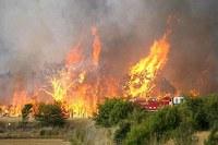 Benedetto XVI vicino alle vittime degli incendi in Australia