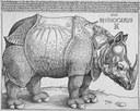 Il Rhinoceros Party of Canada